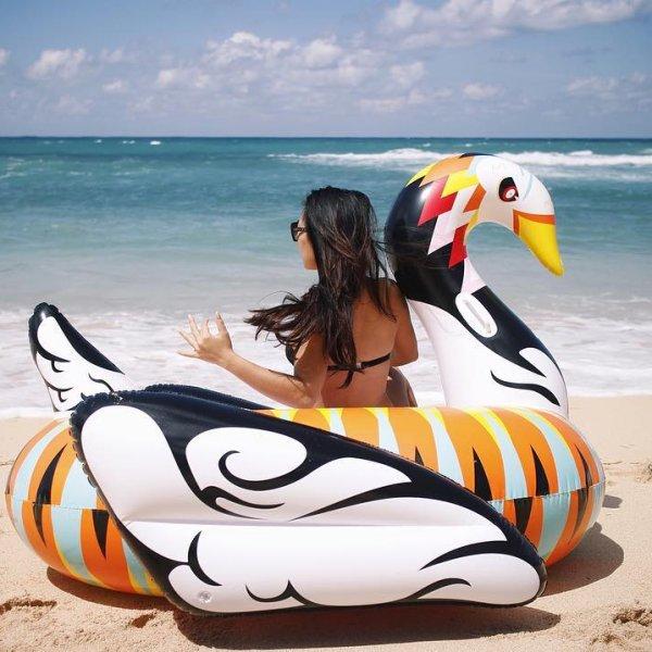 boia cisne colorido